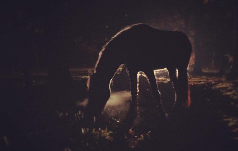 Paardenverlichting nodig? verlichting voor je paard